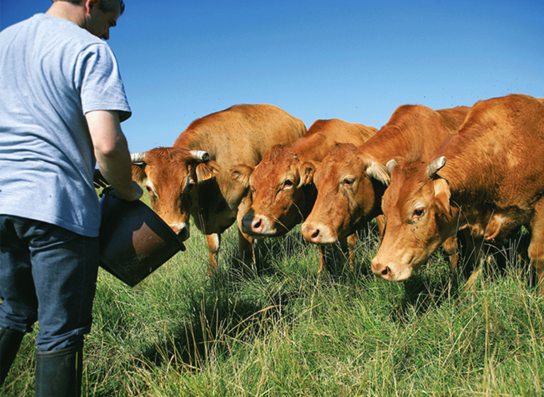 Are you a crop and livestock farmer ?