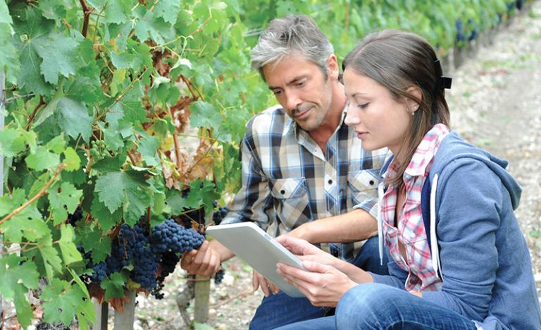 agreo Vine for vine plot management