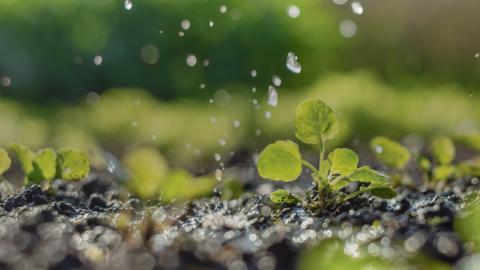 Irrigation des cultures crop irrigation