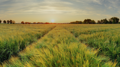 crop protection and yield forecasts