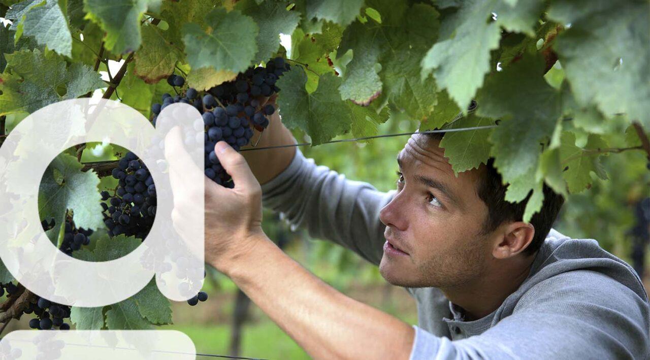 agreo logiciel viticole professionnel